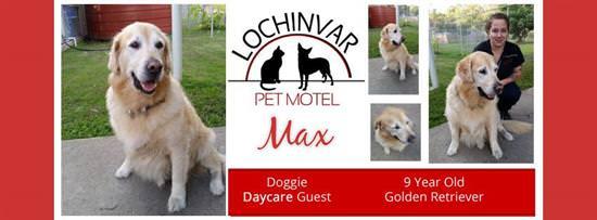 w-lochinvar-pet-motel-big-dog