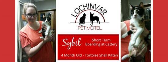 w-lochinvar-pet-motel-cattery